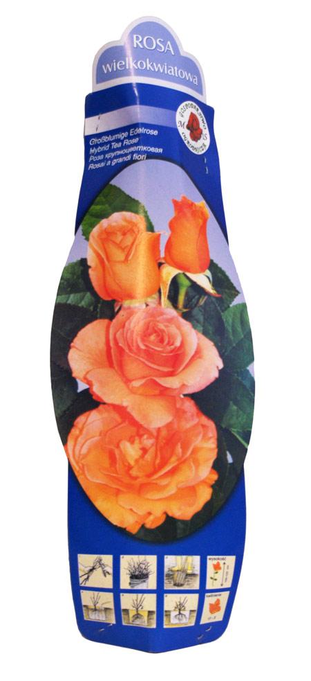 Róże krzewy kapers