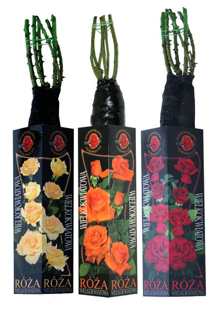 Róże krzewy kartonik